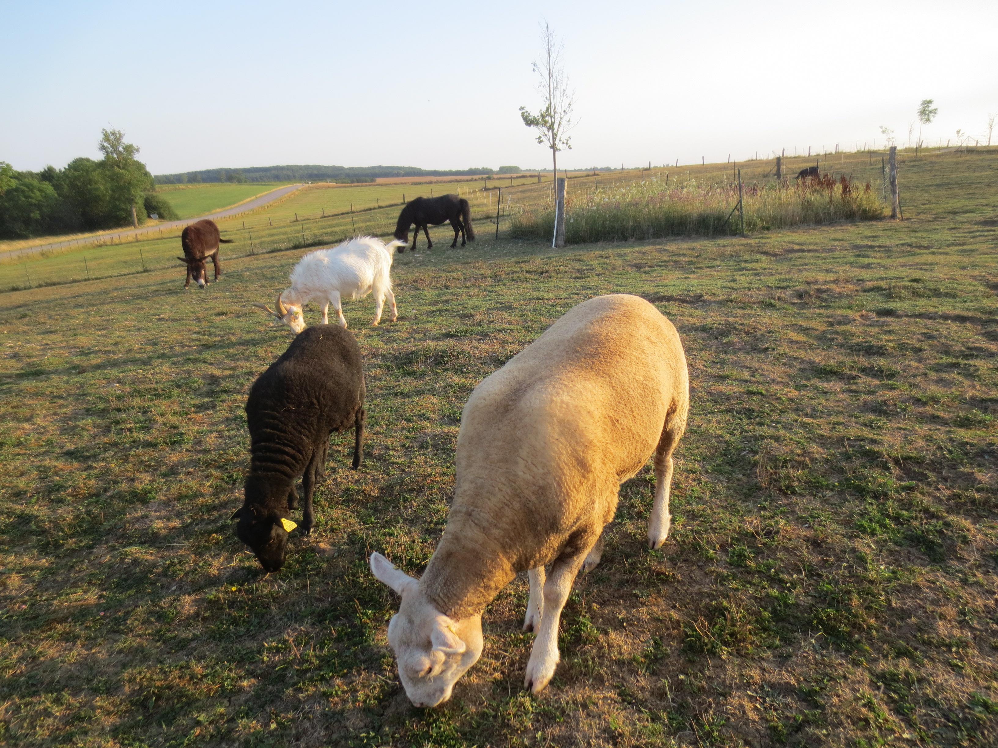 Les animaux de la ferme étaient aussi de la fête, en voisins.