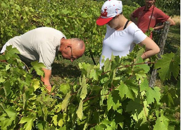 Sous le regard de Laura, le vigneron Denis penché sur sa belle vigne.